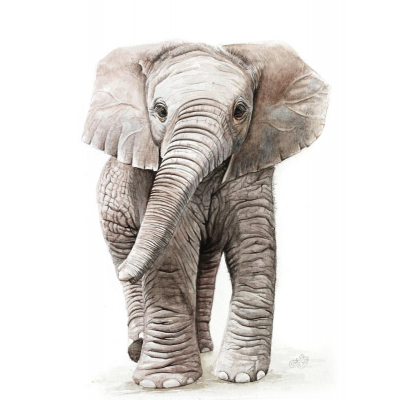Elefant Aquarell