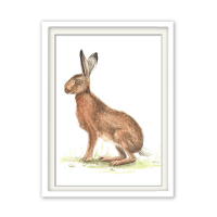 Fineart Tierposter - Hase